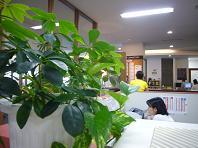 2009731緑.JPG
