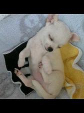 うなぎ犬寝る.JPG
