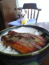 うなぎ犬.JPG