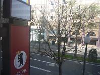 コグマカフェ.JPG