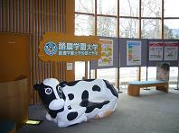 円山動物園・牛.JPG