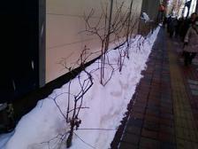 春のあしおと1.JPG
