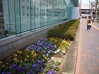 2009花壇.JPG